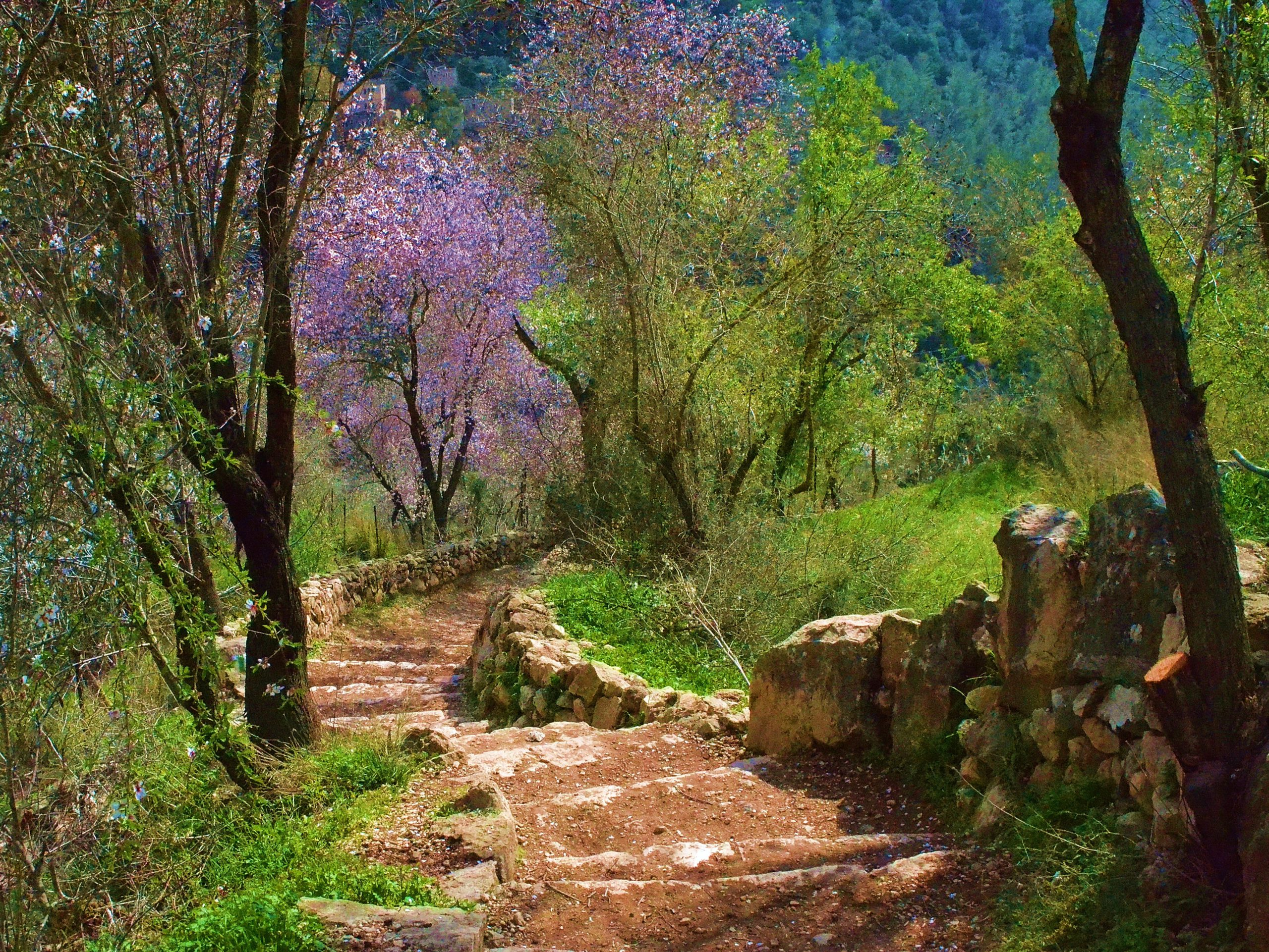 LAUREL FELDMAN, ALMOND TREE'S BLESSINGS: As I was walking, I came to a stone-stepped path cutting through the ancient Judean Hills. I stopped to record the glorious sight of blossoming almond trees! The beauty was spectacular, and seeing nature's wonderful sign — the almond blossoms, the birth of a new season — I was elated. There is a path of hope and rebirth. This image invokes to me all the possibilities of hope during tremendous challenges and struggles along life's path. A presence of being here now and a visual wish to all viewers to always be surrounded by almond trees and their sweet-smelling springtime blossoms.